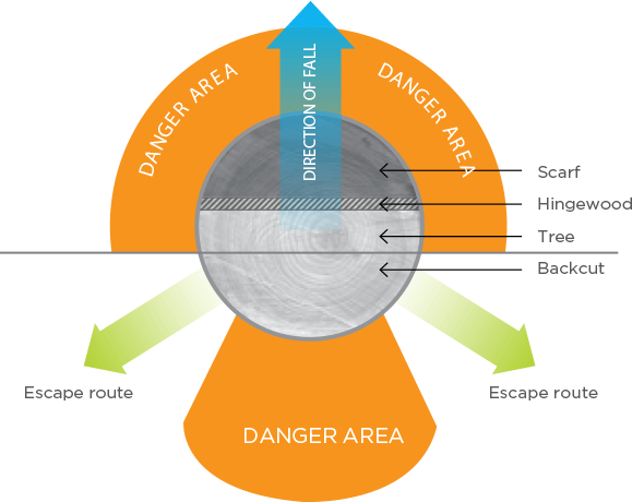 [Image] Escape route positioning when felling a tree, with blue arrow showing direction of fall, orange shaded areas showing danger zones and green arrows showing escape routes; black arrows point to the scarf, hingewood, tree and backcut.